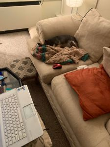 loveseat with computer and dog