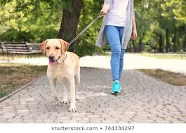woman walking a dog 2